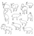 set of rams vector image