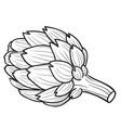 artichoke flower sketch coloring book cartoon vector image vector image