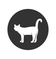 cat white vector image