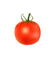ripe red tomato with green stem isolated on white vector image vector image