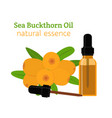 sea buckthorn natural oil essential oil vector image vector image