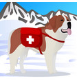 st bernard dog lifesaver in mountains vector image vector image