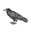 crow with three eyes engraving vector image