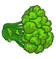 eco broccoli icon cartoon style vector image vector image