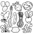 vegetable object set of doodles vector image vector image