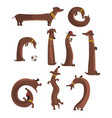 dachshund dog set cute funny long dog in vector image