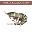 Tigerl Shrimp Marine Food Fish vector image vector image