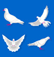 graceful white pigeon stand and spreads wings vector image vector image