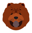 isolated chow chow avatar vector image