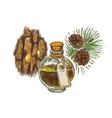 pine tar in a bottle with branch and bark vector image vector image