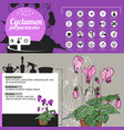 template for indoor plant cyclamen tipical vector image
