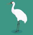 whooping crane cartoon vector image vector image