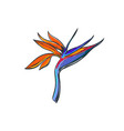 bird of paradise tropical flower vector image vector image