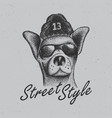 chihuahua street style poster vector image