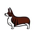 welsh corgi standing in profile vector image vector image