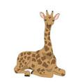 giraffe sits vector image