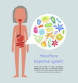 microflora digestive system vector image vector image