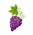 fresh food ripe grapes autumn season vector image