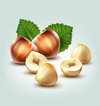 hazelnuts with leaves vector image vector image