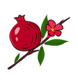 pomegranate branch with fruit flower with leaves vector image vector image