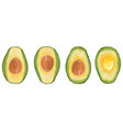 set of realistic avocado evergreen fruit plant vector image
