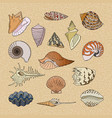 shells marine seashell and ocean cockle vector image