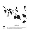 black silhouette birch branch vector image vector image