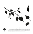 Black silhouette of birch branch vector image vector image