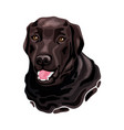 brown labrador retriever dog head vector image