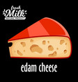cut piece of cheese edam isolated on black vector image