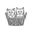 kittens in basket sketch vector image