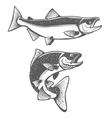 Salmon silhouettes Fresh seafood Salmon fishing vector image vector image
