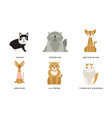 collection different cats breeds manx persian vector image vector image