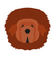 isolated tibetan mastiff vector image