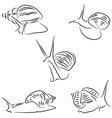 Painted snail Achatina vector image vector image