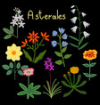 Asterales plant order vector image vector image