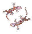 isolated low poly colorful gecko with white back vector image vector image