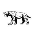 saber toothed tiger smilodon saber-toothed cat vector image