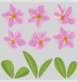 pink and yellow plumeria flower vector image vector image