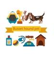 basset hound dog infografic with dog care isolated vector image
