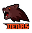 brown strong furious roaring bear head vector image