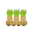 Green Onions In Crate vector image