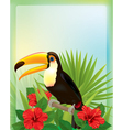 Tropical background with toucan vector image