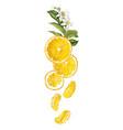 vertical fruit decor line with orange fruit vector image