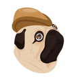 dog brown hat on white background vector image