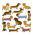 set of dog dachshund vector image vector image