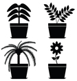 flower in pot black vector image