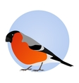 bullfinch isolated on blue circle frame vector image vector image