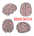 human brain organ sketch icon vector image vector image