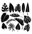 leaves tropical leaves vector image vector image